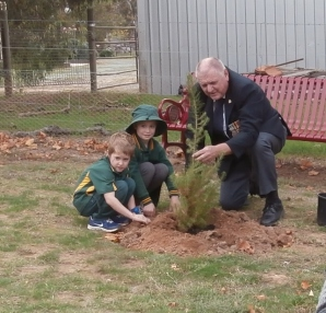 Planting the Pine